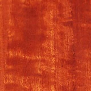 Red Gum | Eucalyptus tereticornis